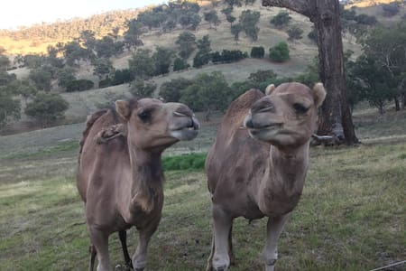 Two Camel B&B 688 Little River Rd Tumut - Little River - Bed & Breakfast