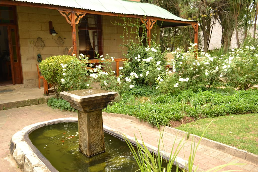 A small part of the garden including the Jasmine that grows and flowers in the summer bathing the house in a pleasant smell.