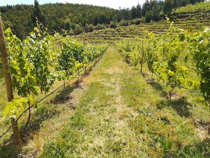 Walk through the vineyard