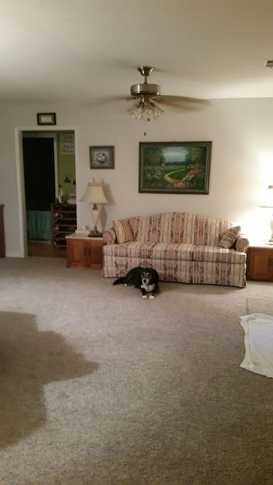 Living room with senior dog, Boots