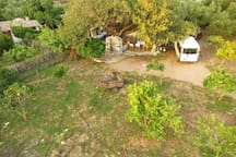 The wild-pear tree area from above