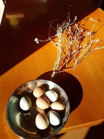 we have our own biological eggs :-) fresh every morning - jedem morgen frische eier von unseren hühnern.