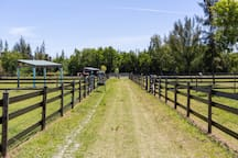 Ground level view of grassy aisle leading to paddocks