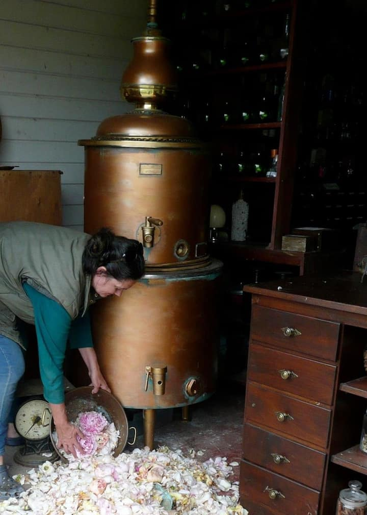 Your Host distilling roses
