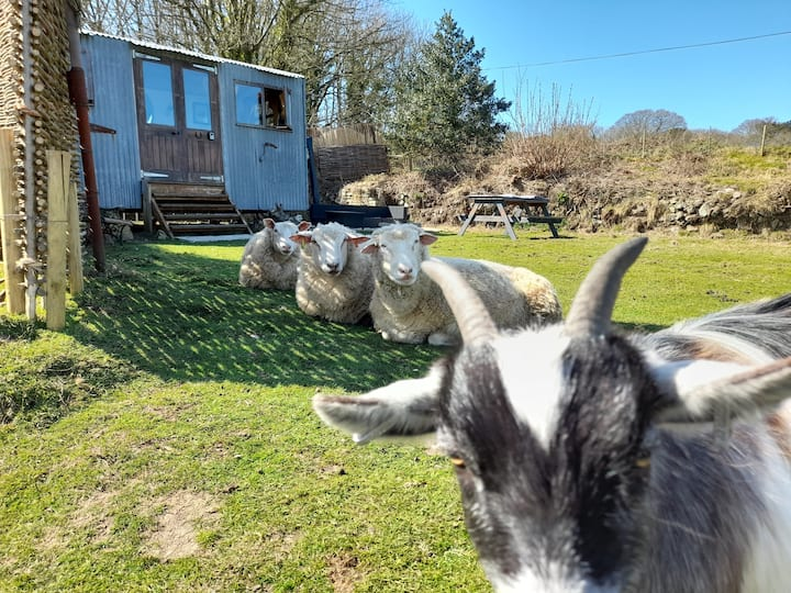 Laid Back Living in the Shepherds Hut