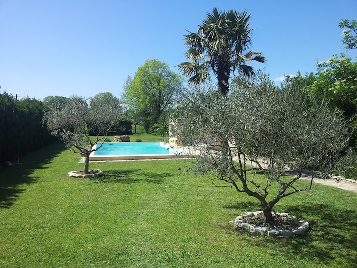 The olives trees, the pool, the sun