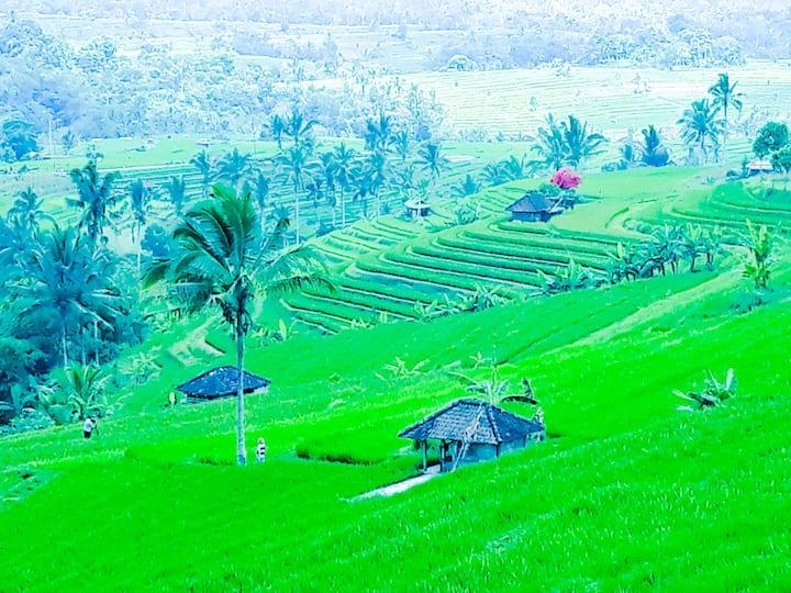 Les rizières Jatiluwih