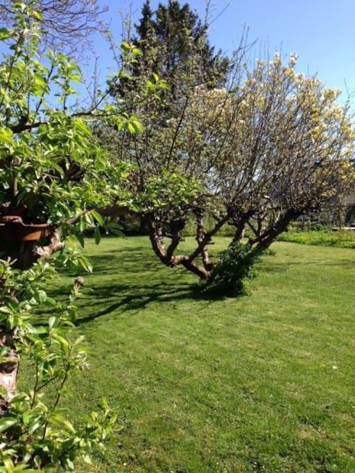 Stor have med frugttræer