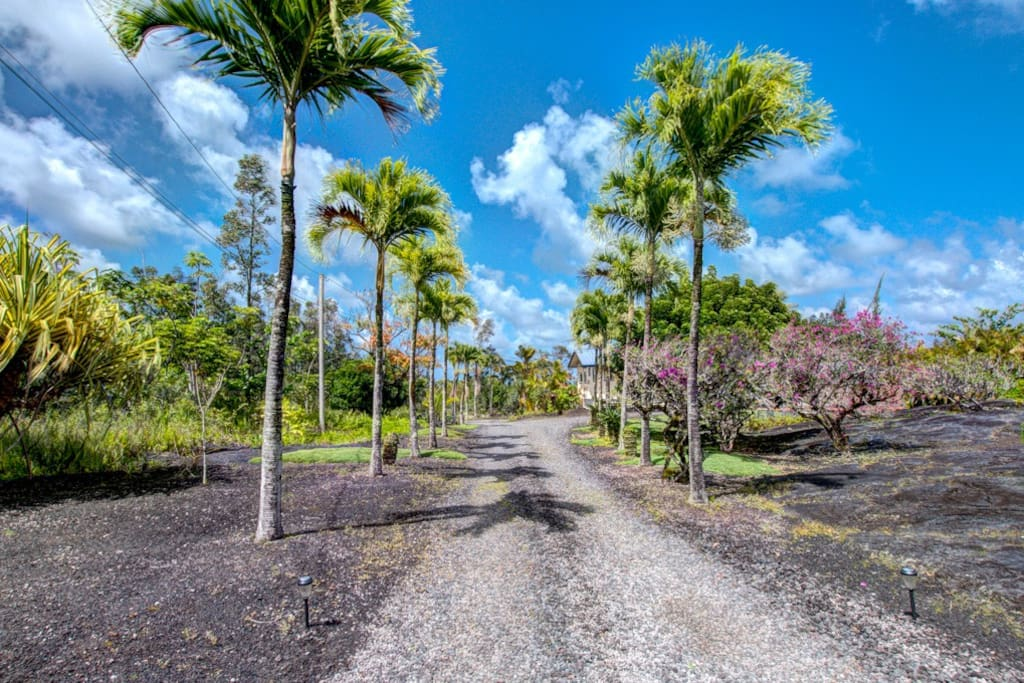 Palm lined drive. Many tropical fruits & flowers grow here on our  property.