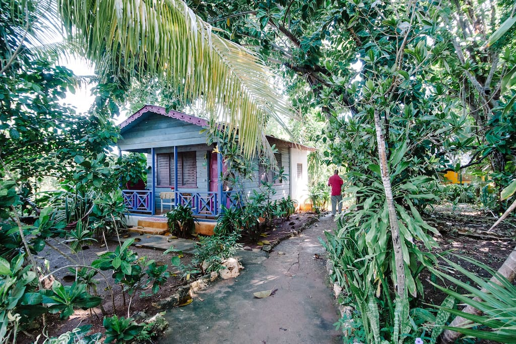 garden view of Coconut Cottage