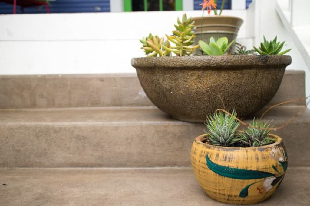 Succulents abound throughout the home.