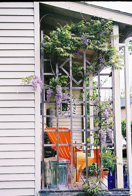 Wisteria vine on the side of the porch by kitchen door entry.