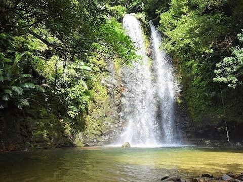 Great Nature! Northern Okinawa deep forest★