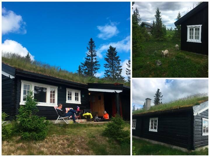 Hytte Hafjelltoppen, ski in/out, nære Gaiastova