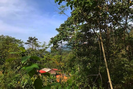 Chanting Trees: A Farm-House Stay amidst trees!