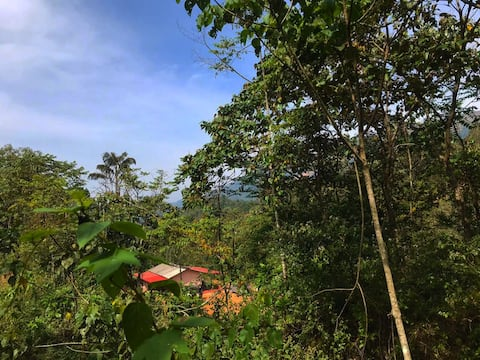 The Chanting Trees: A Farm-House Stay in Coorg