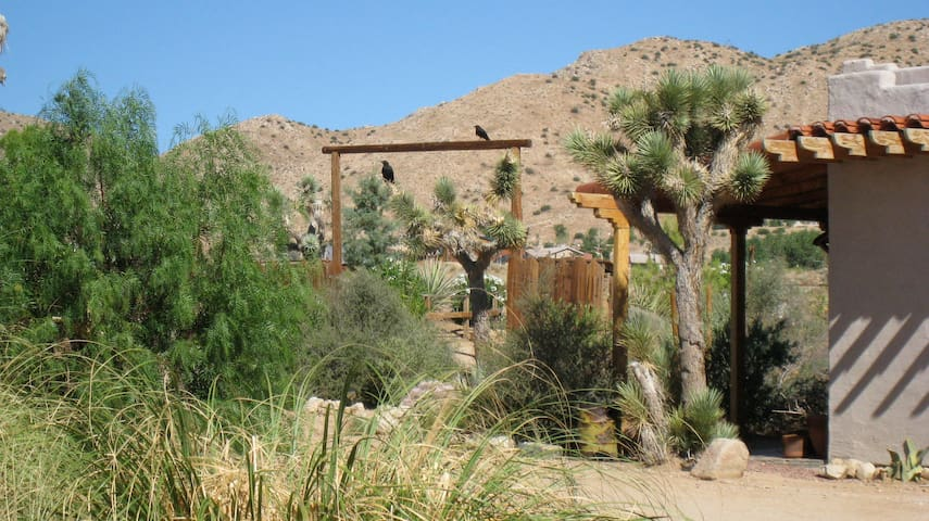Casa Grande at Rancho Mojave: Home for the Soul
