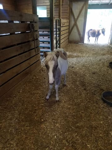 Horse Hotel Stall for your Horse w/Trailer Parking