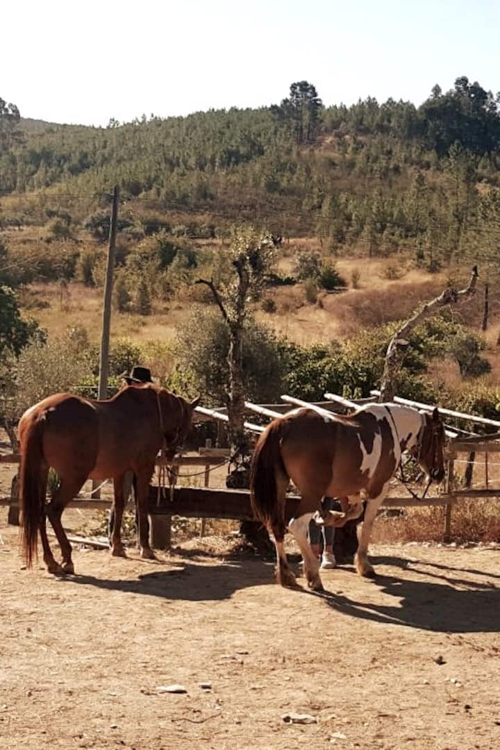 Horses being prepared for the ride