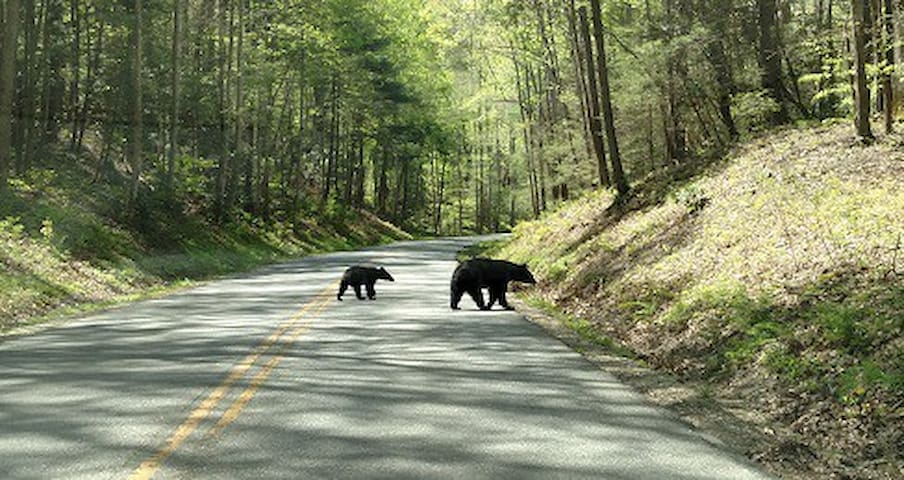 Great location Smoky Mountains