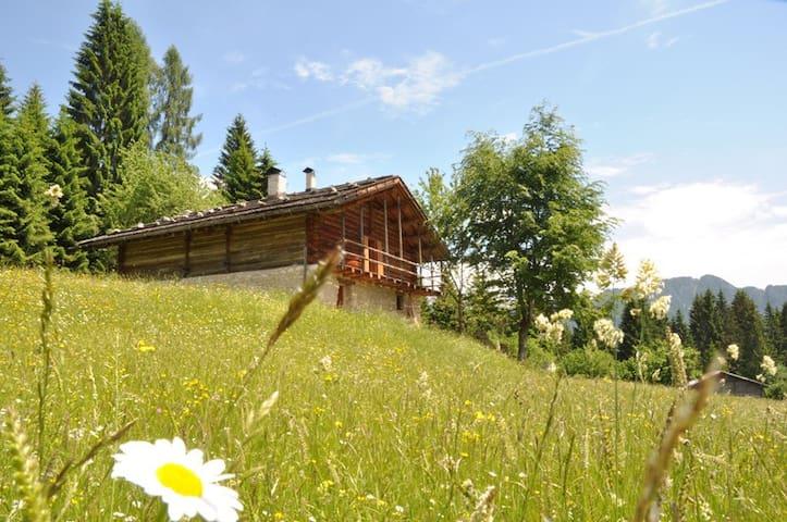 Baita ai piedi delle Dolomiti - Tonadico - Cabin