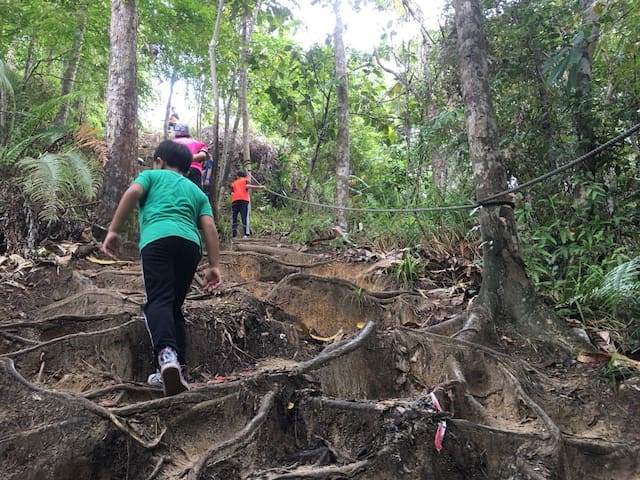 Jungle Trekking in the City of Bandar Seri Begawan