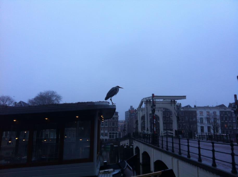 Early morning @ Skinny Bridge houseboat