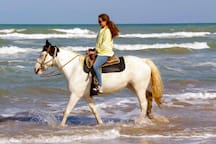 Enjoy the beach on horseback!