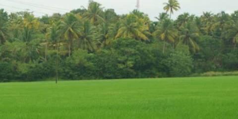 House with paddy field view near Vembanattu lake
