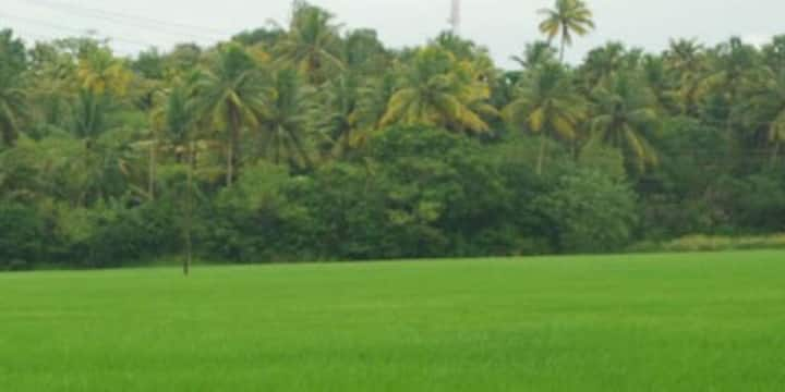 House with paddy field view near Vembanattu lake