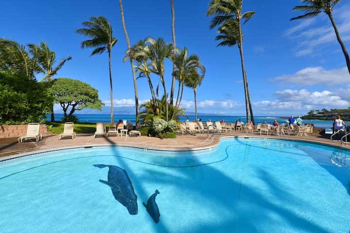 Napili Shores Studio By The Beach! Location! D227