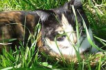 "unsere Katze ""Mia"""
