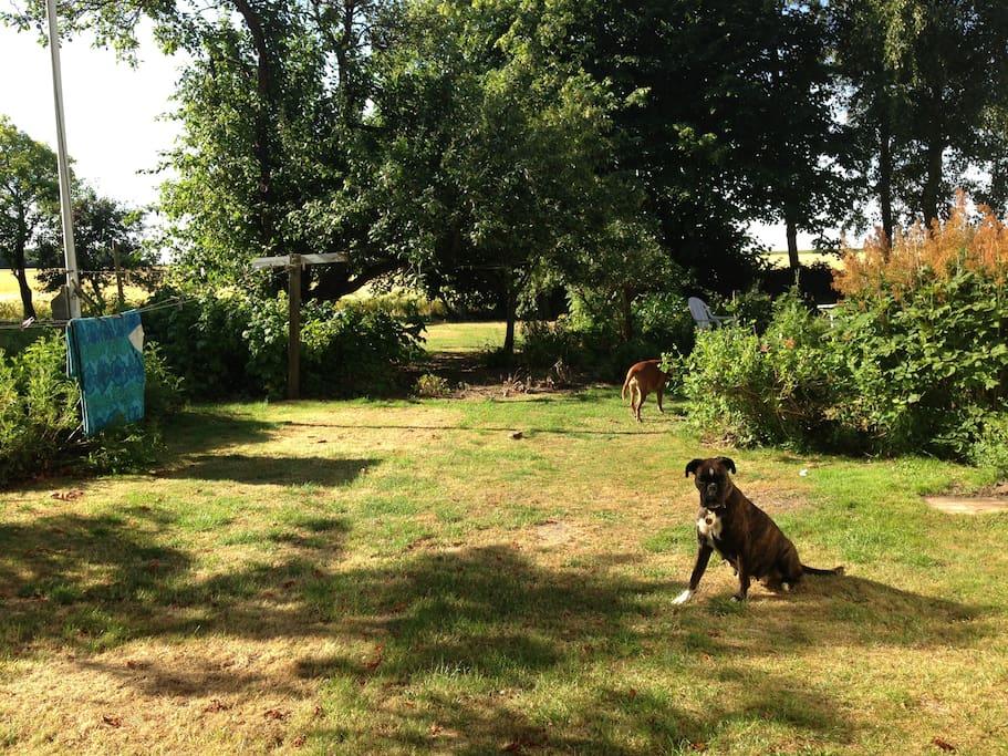 Have og græsplæne med tumleplads
