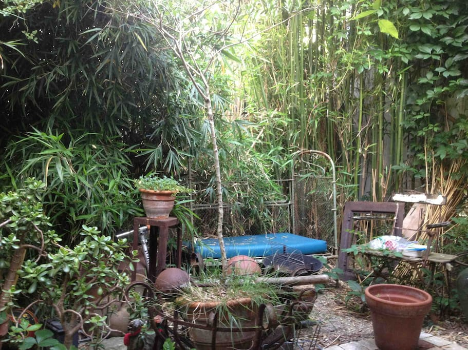 tropical corner, bamboo, olive tree etc.