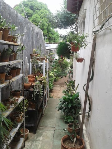 Casa em Potilândia com lindo jardim e quintal!!