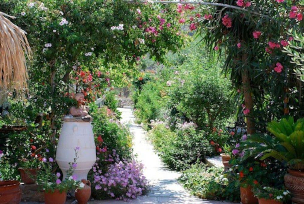 Inside Harry's Paradise garden!
