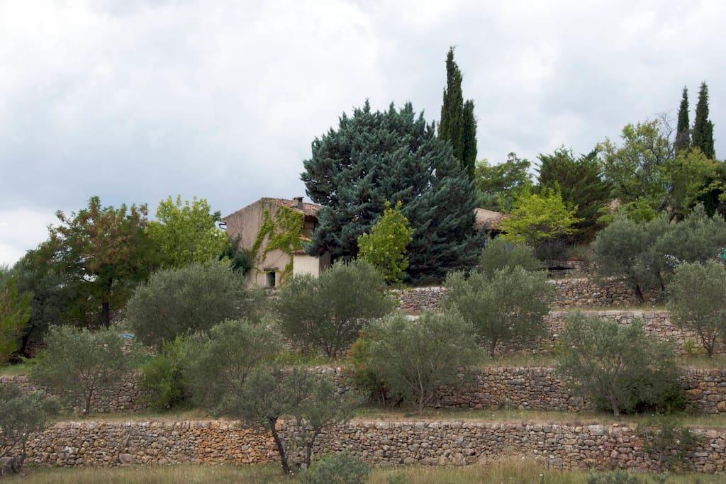 La maison au milieu des oliviers