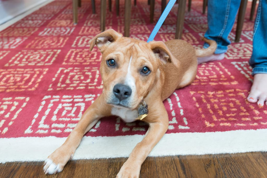 Alys, our dog is  well-behaved (mostly) and happy-go-lucky (very).  She can't wait to meet you!