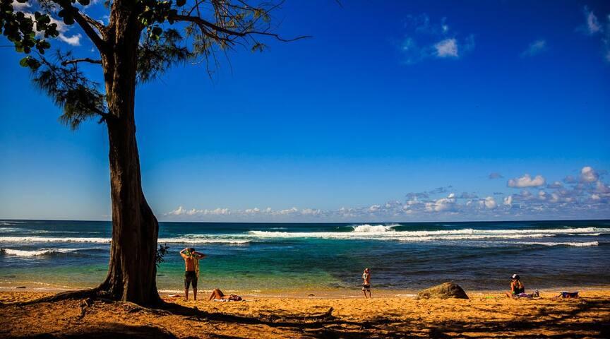 North Shore, Oahu    Velzyland