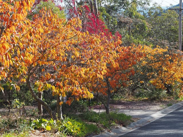 Autumn colours in the driveway.