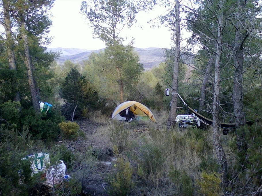 Some people have actually set-up in the wilder part of our forest!