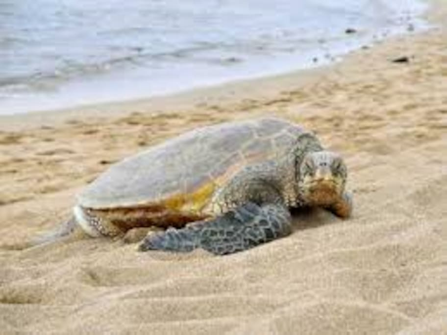 June , July ,Aug, you can see the Caretta s