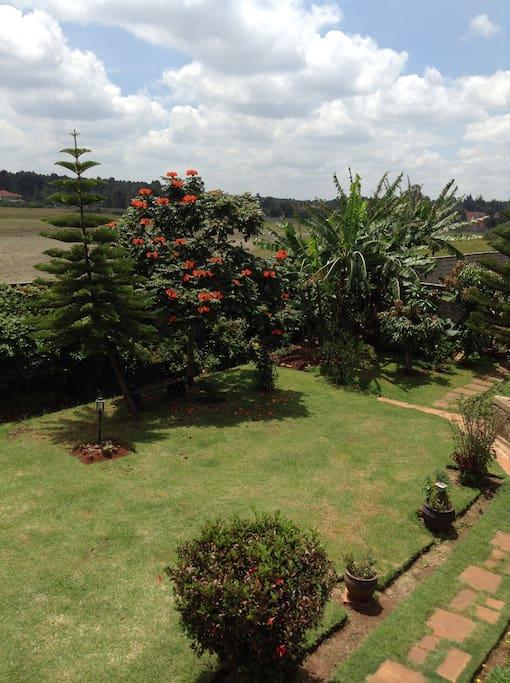 Mature garden, with Nandi Flame in season