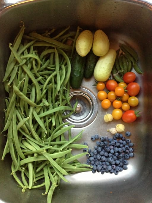 Here are some of the veggies and berries from our backyard garden last July (2014). There will be more this year!