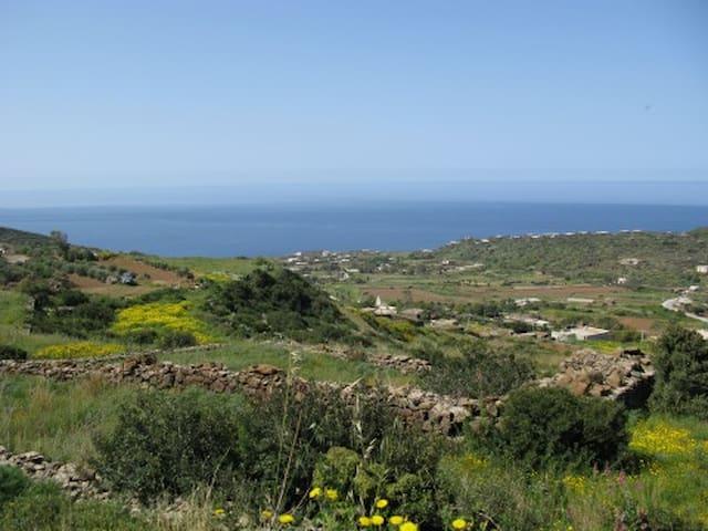 Pantelleria DAMMUSIVACANZE : Ulivo