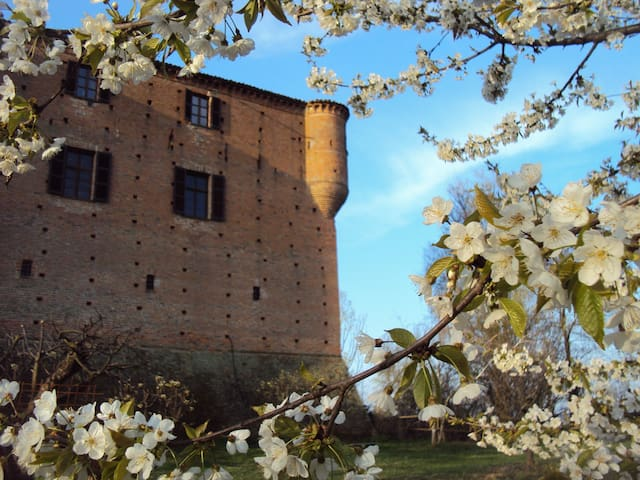 Ancient castle in Monferrato - Maranzana - Linna