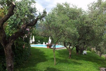 House with pool in between the olive trees - Costermano