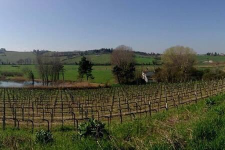 Casa I Picchi - stunning view on Bertinoro - Bertinoro - Talo