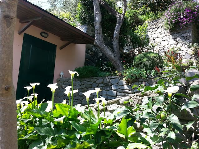 Monterosso Cozy Cottage in lemons garden