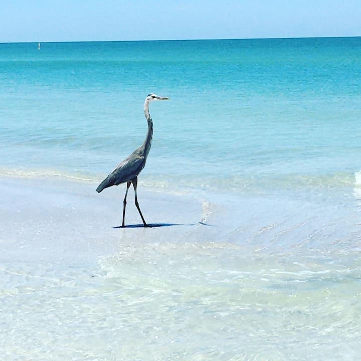 Beautiful Belleair Beach  Gulf Front Condo